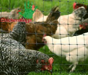 Corral de gallinas con malla gallinera.