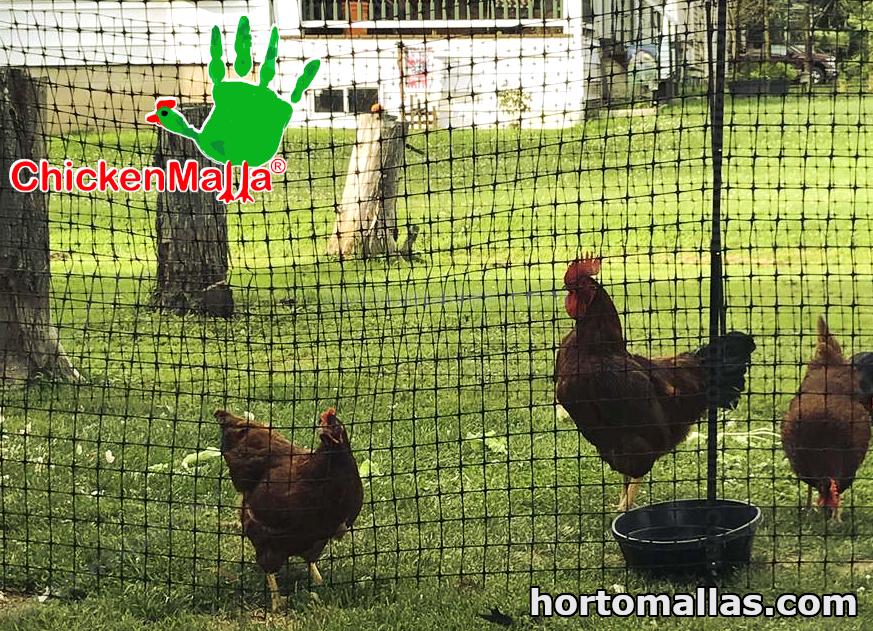 Chickenmalla para corral